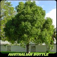 Australian Bottle