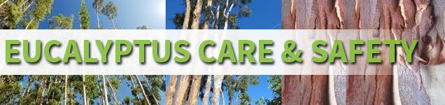 Eucalyptus-Care