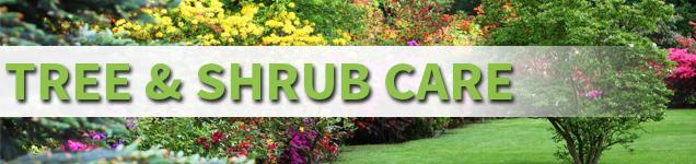 Tree-and-Shrub-Care