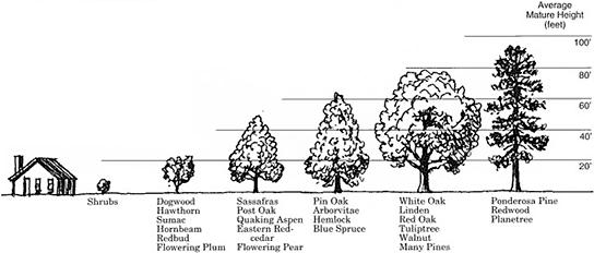 Height ranges of tree species