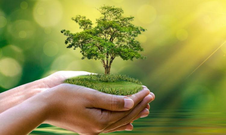 planting san Diego trees, trees san Diego