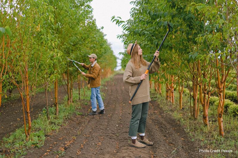 drought tolerant trees, fertilization