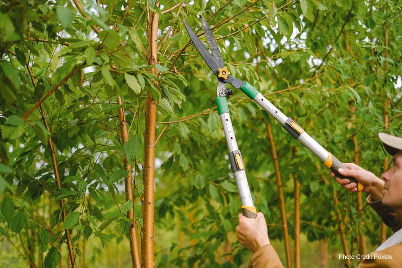 Safety Pruning